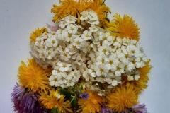 kvety_12